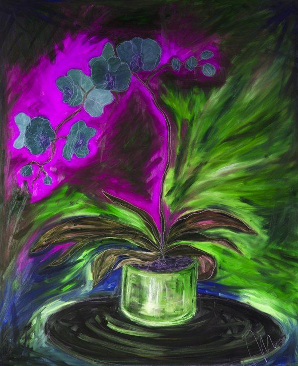 Orchidej barevná varianta 7